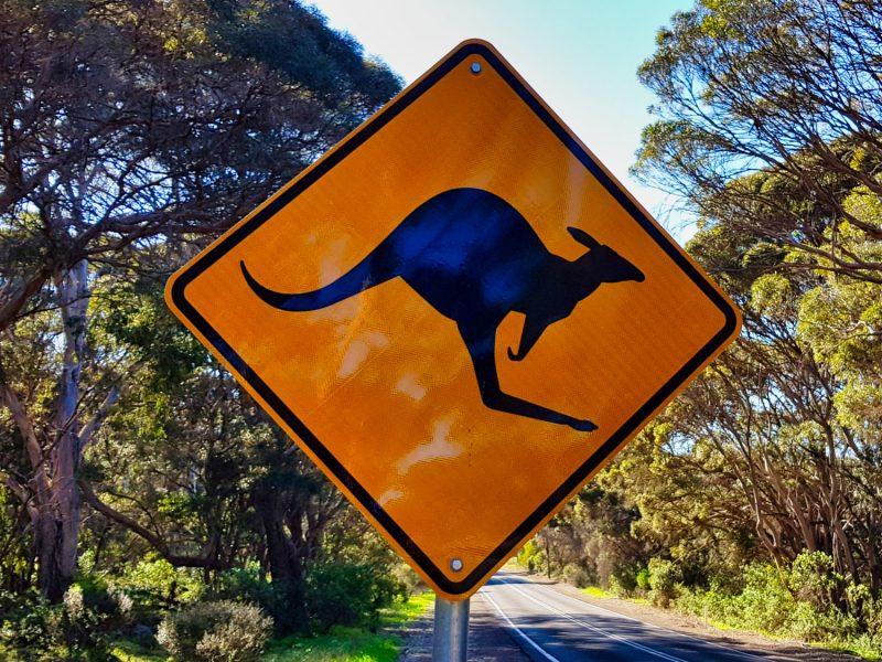 06-Kangaroo